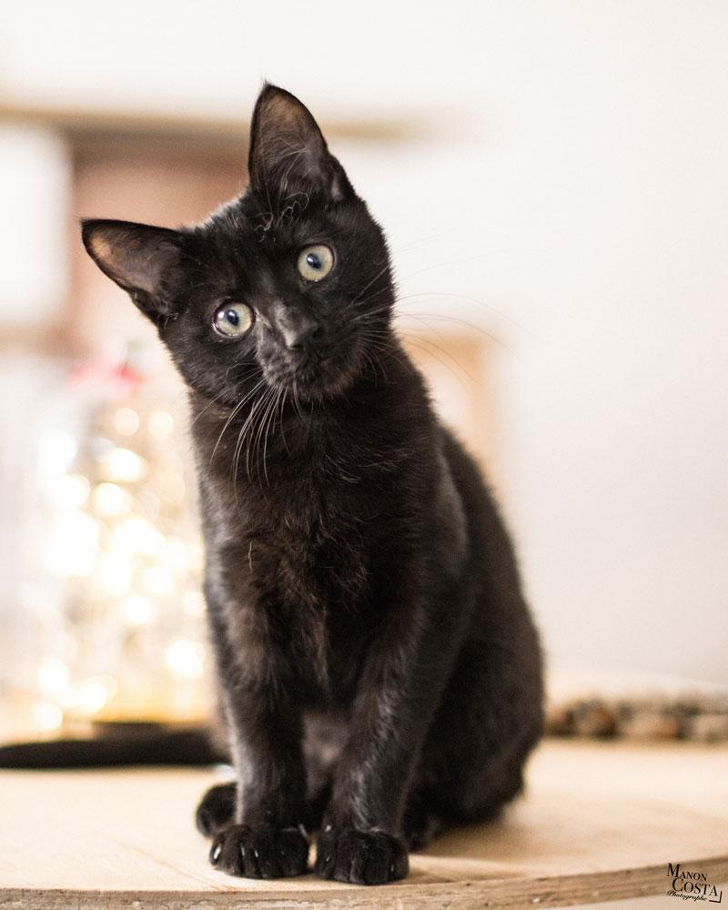 l'instant chat hyères
