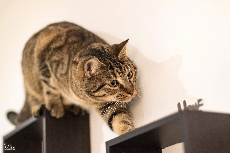 bar à chats hyères